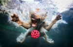 Underwater_dog_by_seth_casteel2