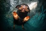 Underwater_dog_by_seth_casteel3
