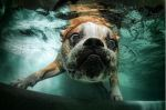 Underwater_dog_by_seth_casteel5