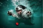 Underwater_dog_by_seth_casteel7
