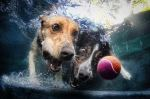 Underwater_dog_by_seth_casteel8