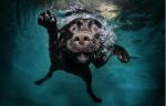 Underwater_dog_by_seth_casteel9