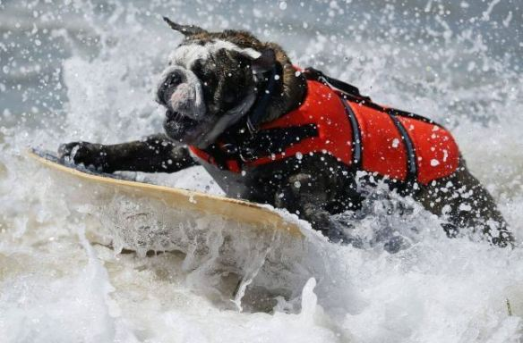 surfing_dog_01
