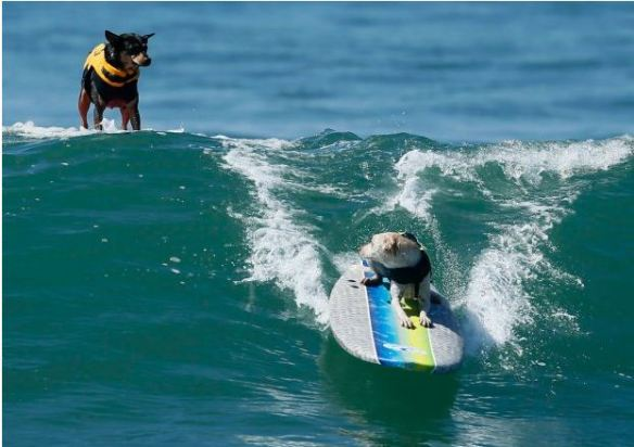 surfing_dog_04