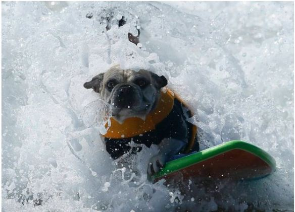 surfing_dog_05