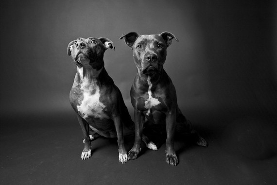 Susan_Sabo_dog_portrait_brother_and_sister